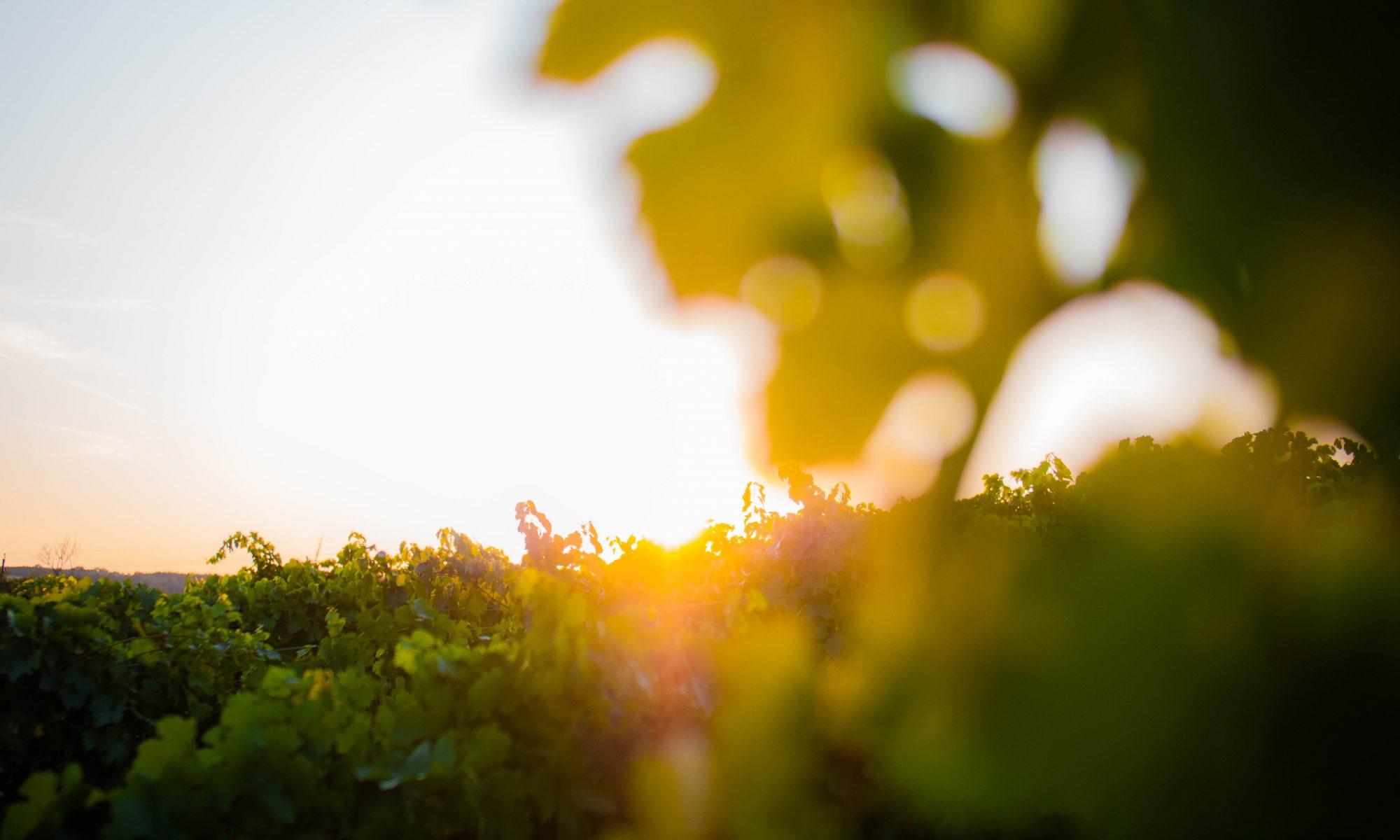 Weinbaufamilie Schuckert